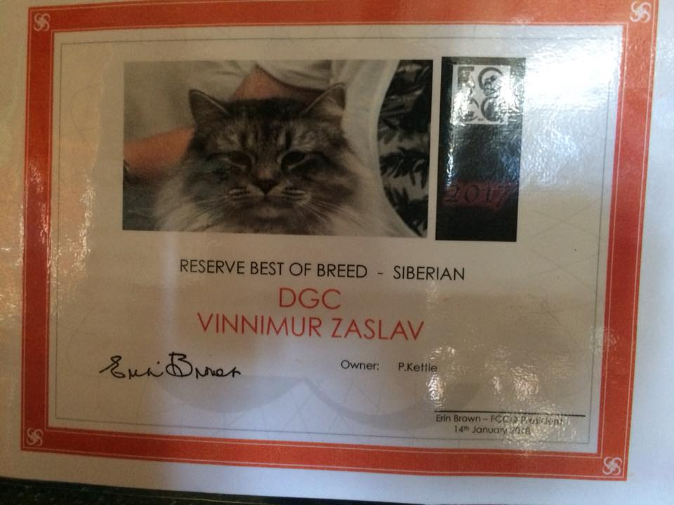 Reserve Siberian of the Year 2017