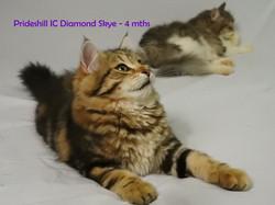 Prideshill IC Diamond Skye