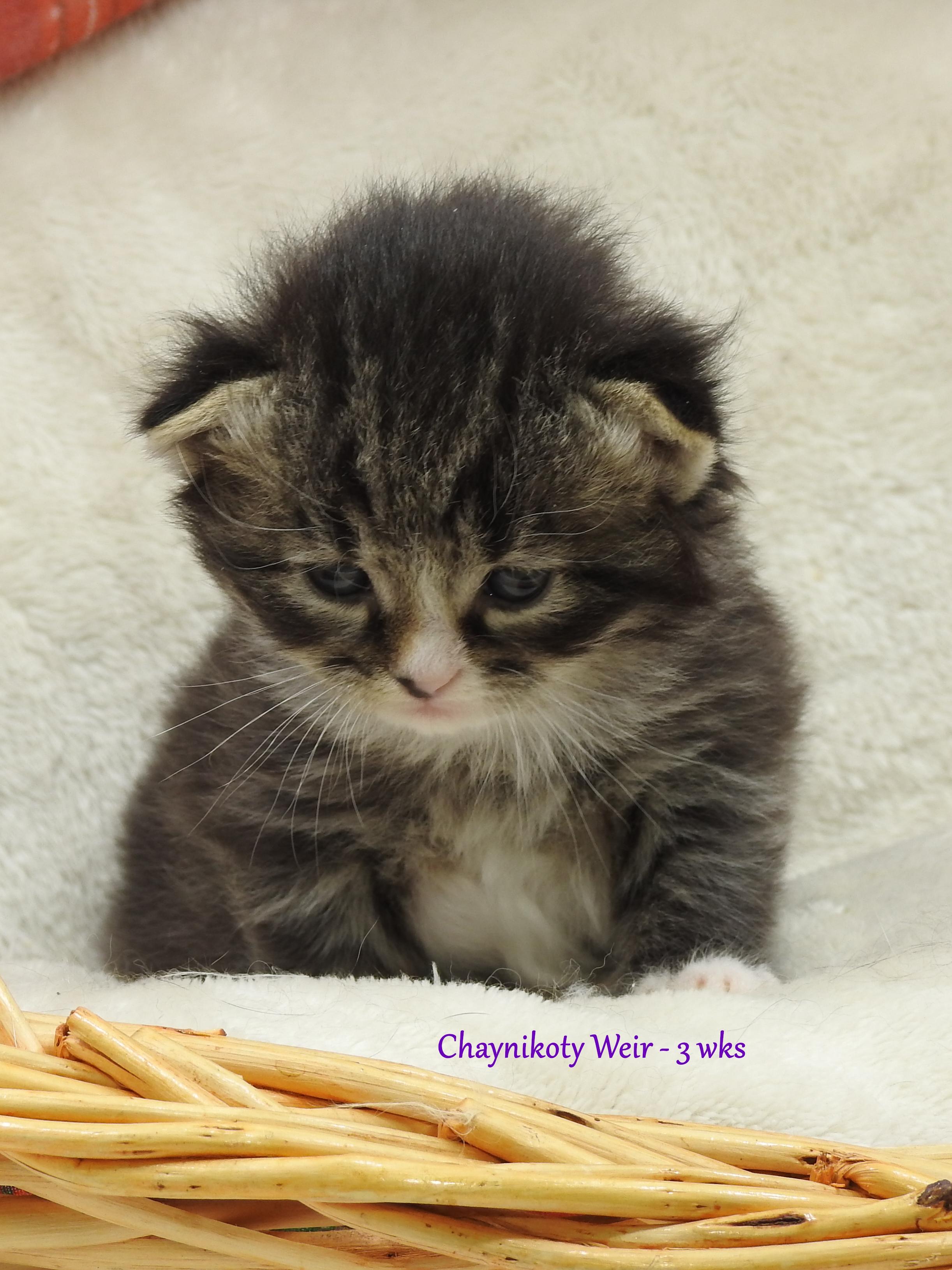 Chaynikoty Weir - 3 wks