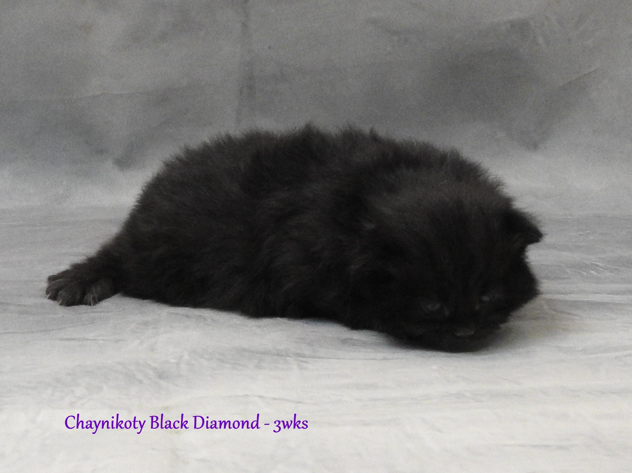 Chaynikoty Black Diamond
