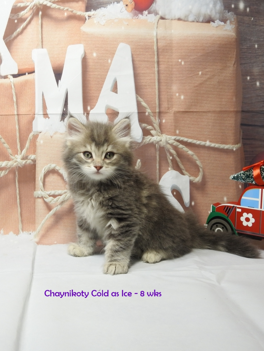 Chaynikoty Cold As Ice