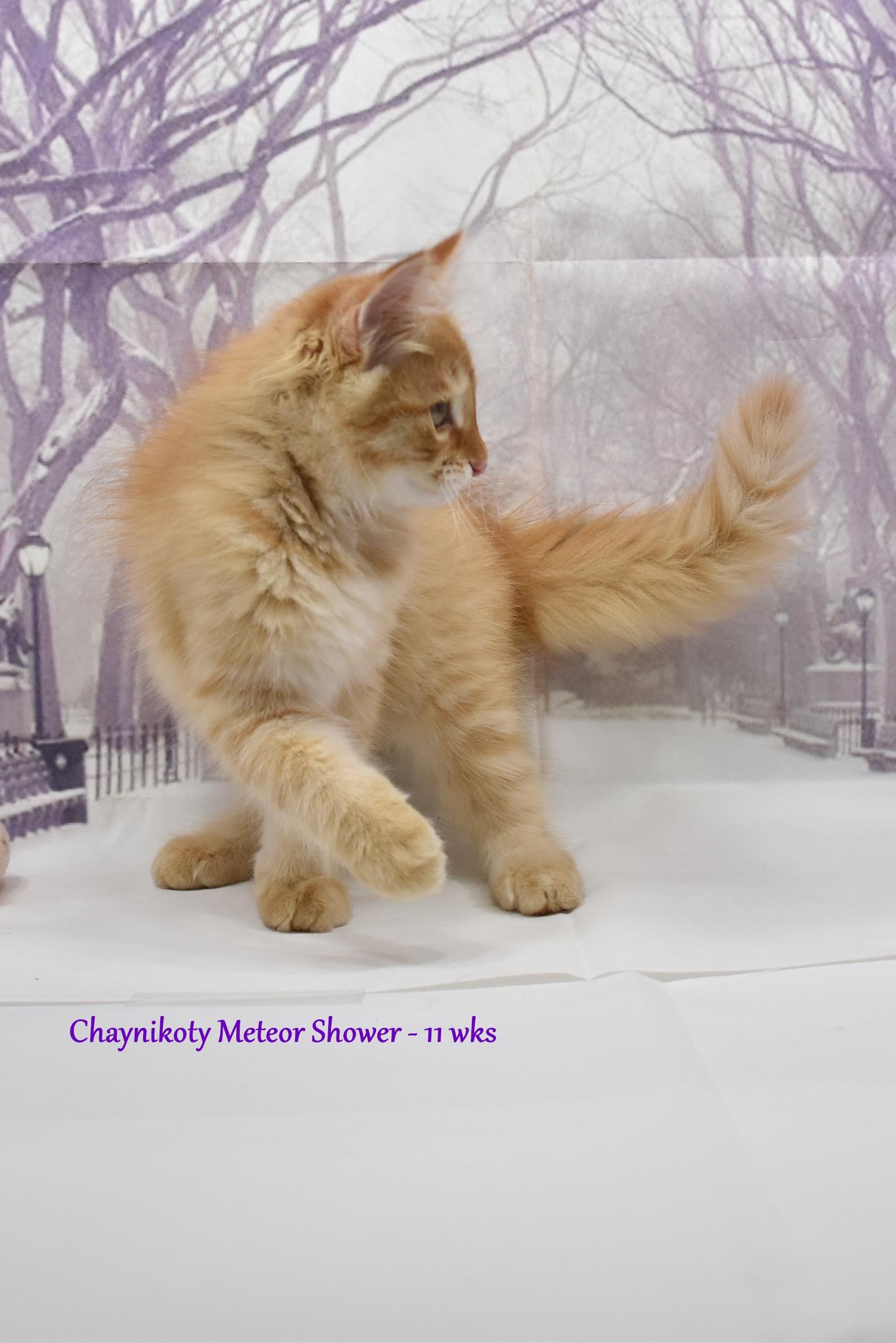 Chaynikoty Meteor Shower