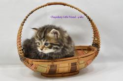 Chaynikoty Little Friend