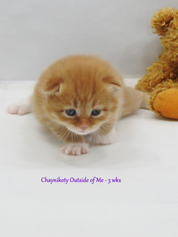Chaynikoty Outside of Me - 3 wks