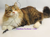 Chaynikoty Tiny Dancer - 7 mths.jpg