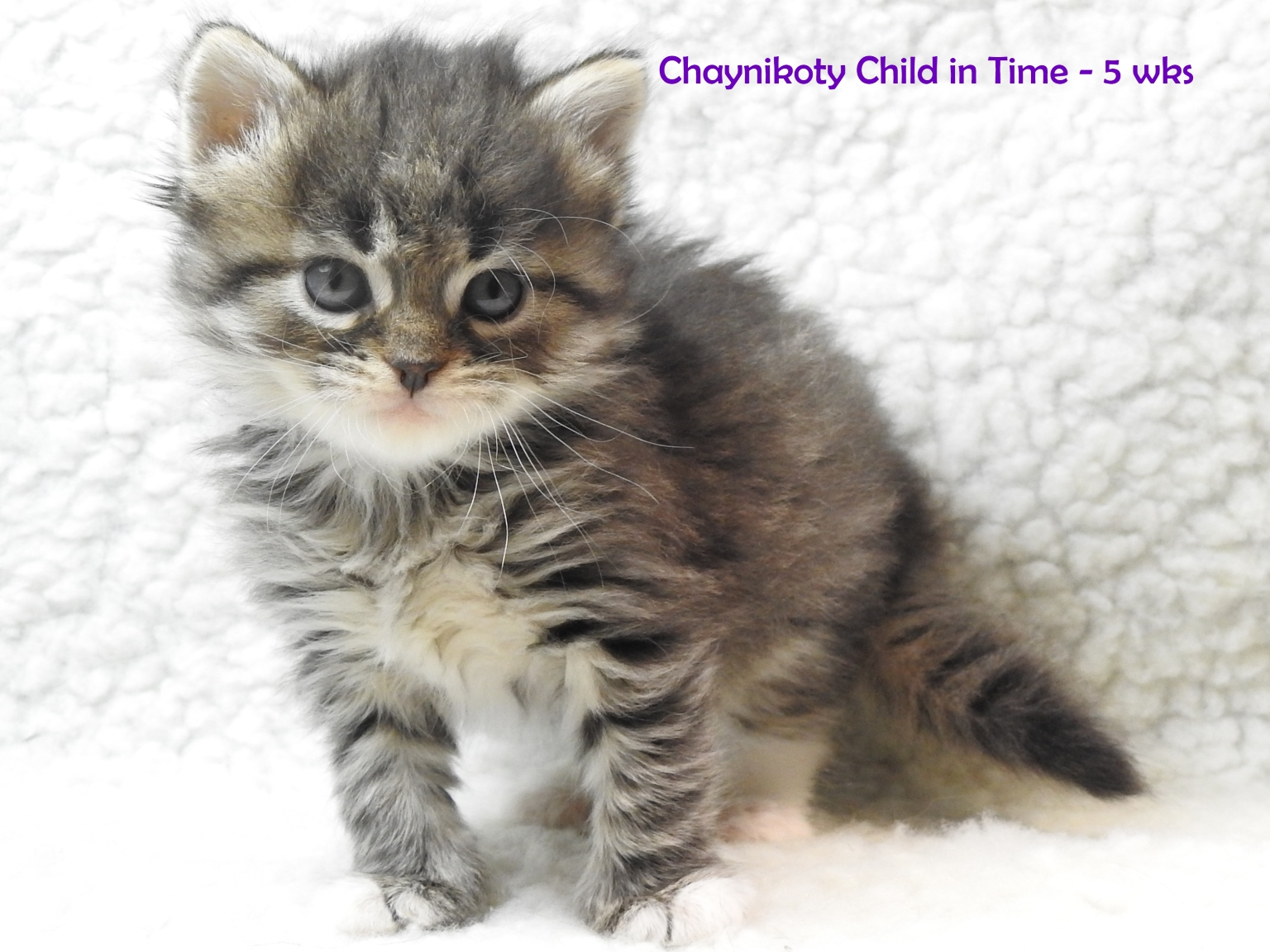 Chaynikoty Child in Time