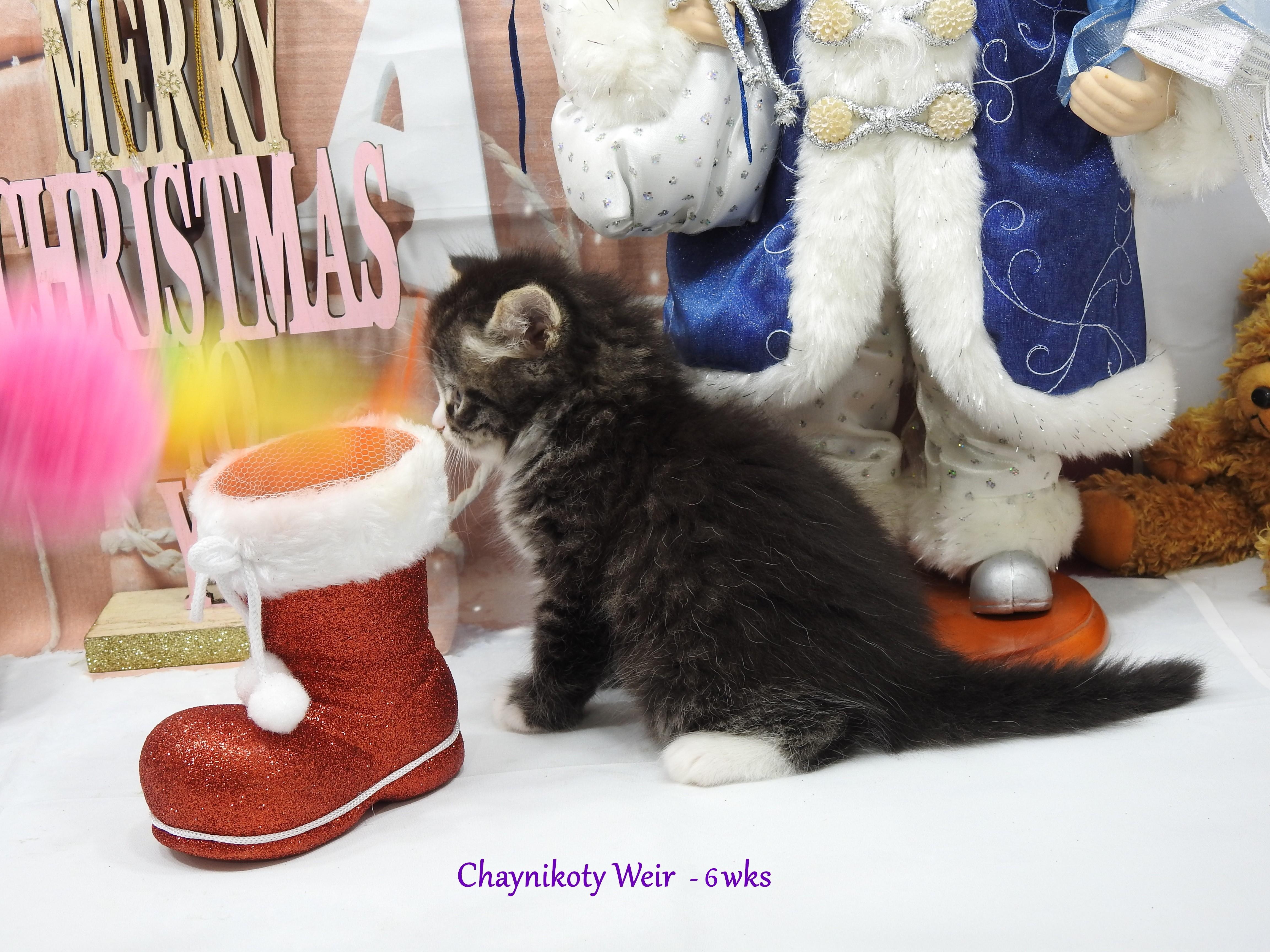 Chaynikoty Weir - 6 wks