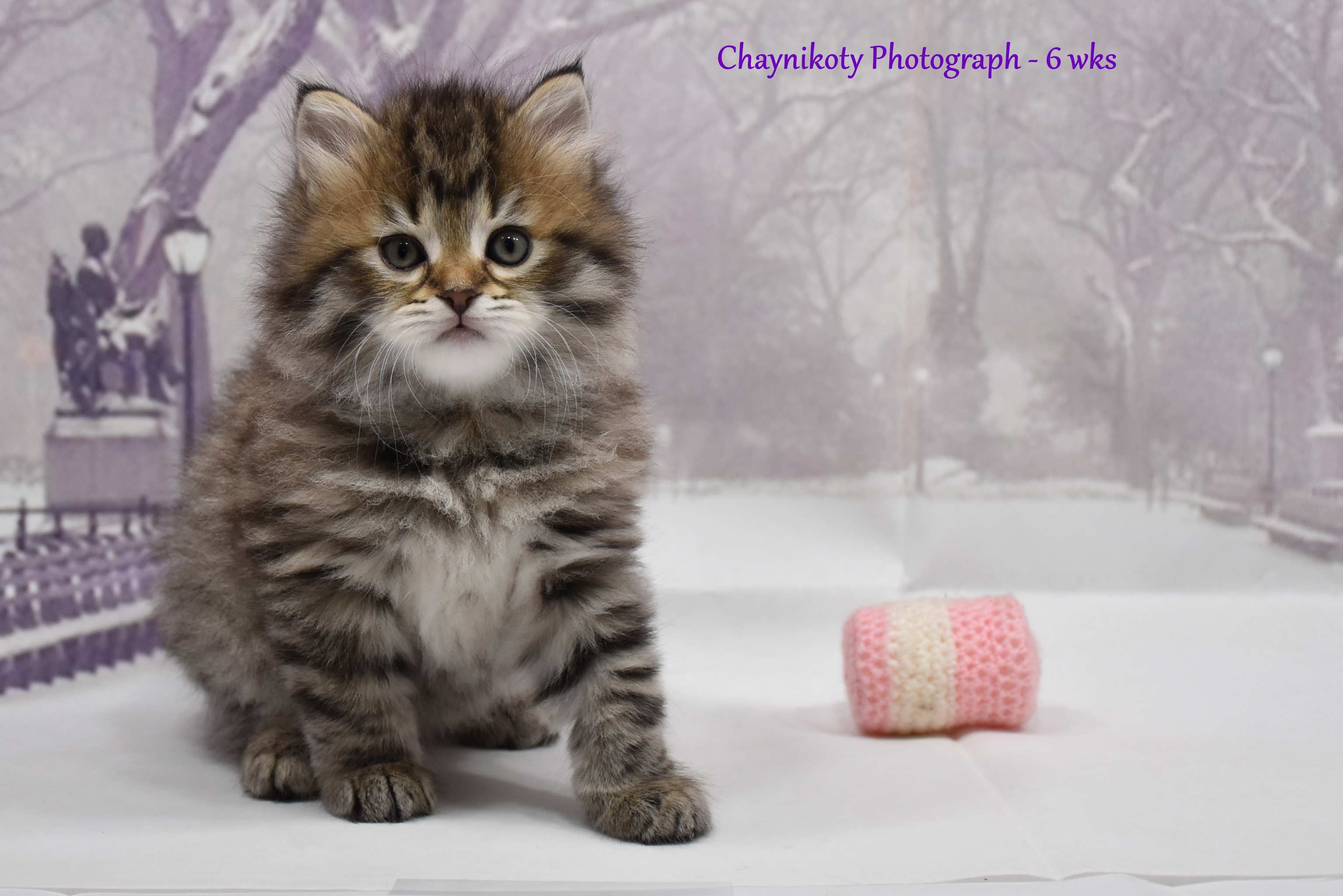Chaynikoty Photograph