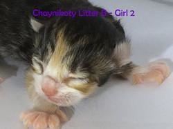 Chaynikoty Tiny Dancer - girl - 1 wk