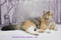 Chaynikoty Strawberry Avalanche