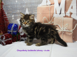 Chaynikoty Jackknife Johnny