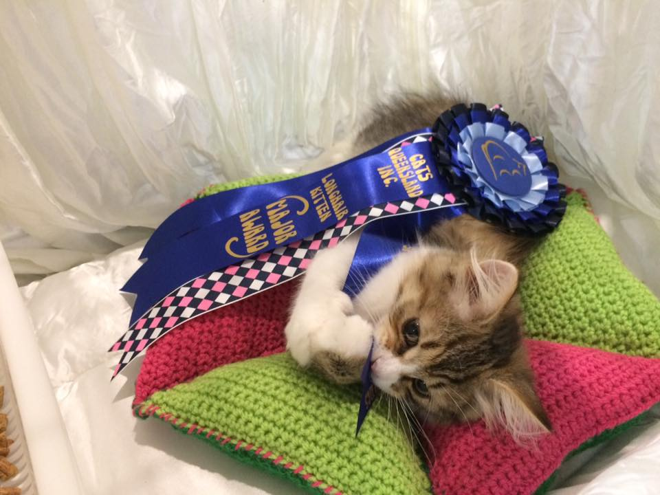 the taste of victory - first rosette