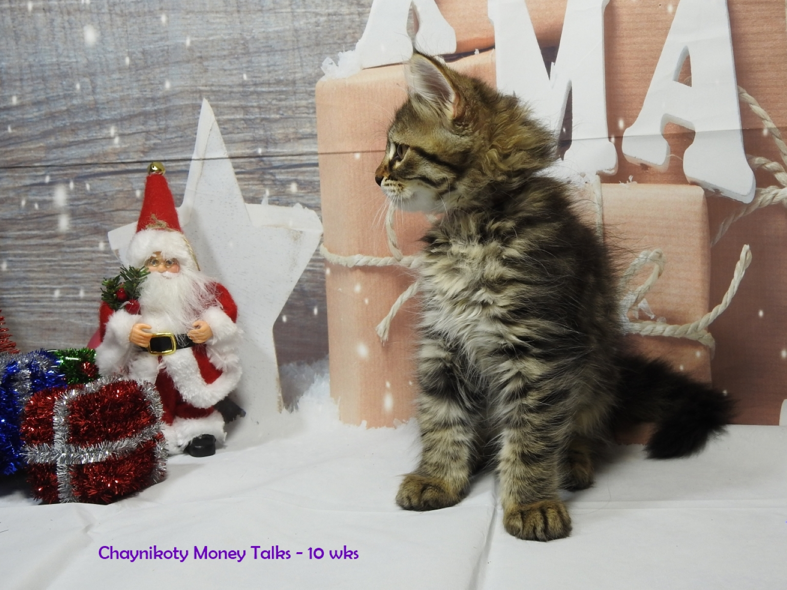 Chaynikoty Money Talks