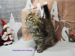 Chaynikoty Storm Bringer