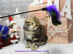 Chaynikoty Girl on the Moon