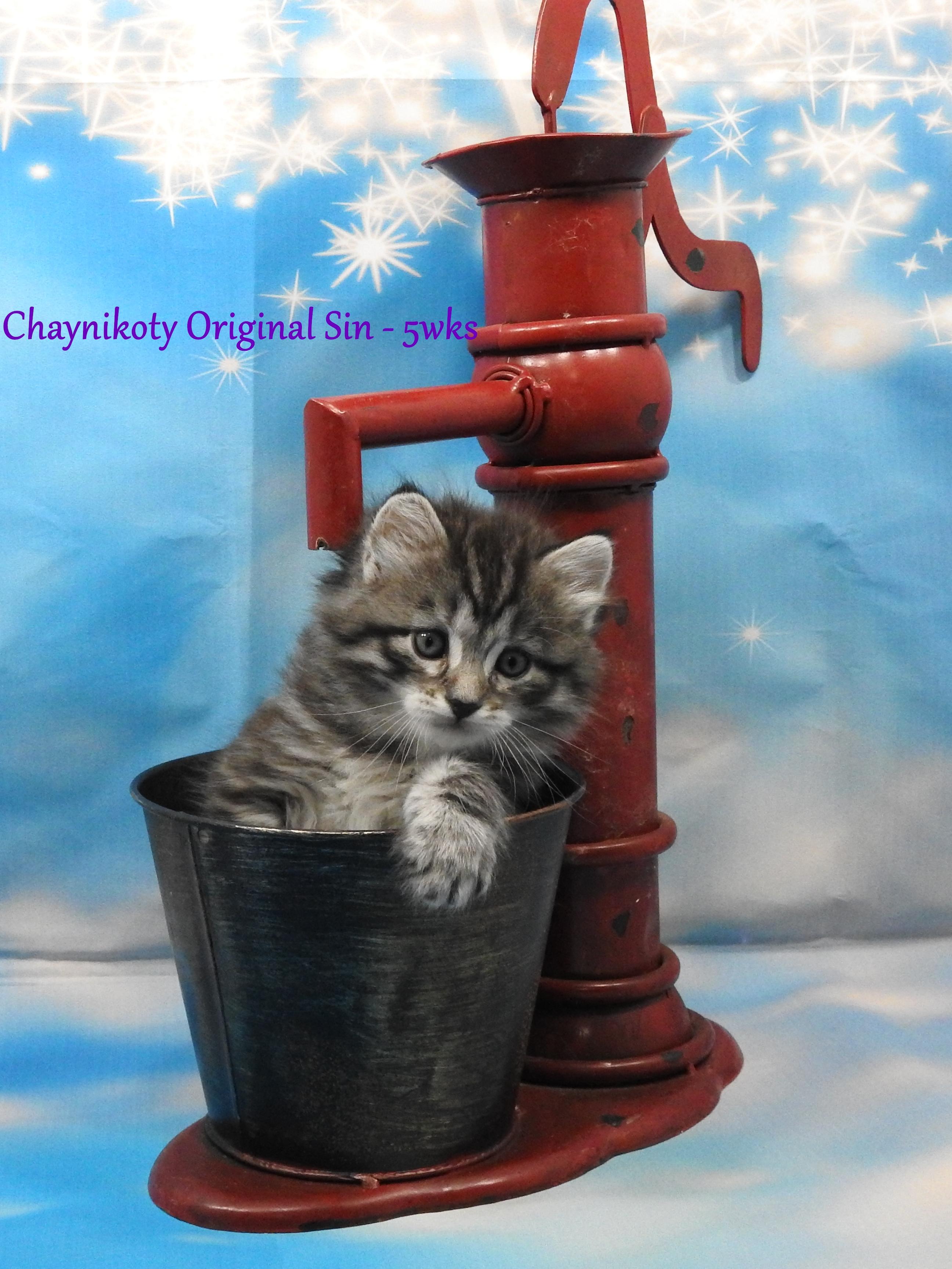 Chaynikoty Original Sin