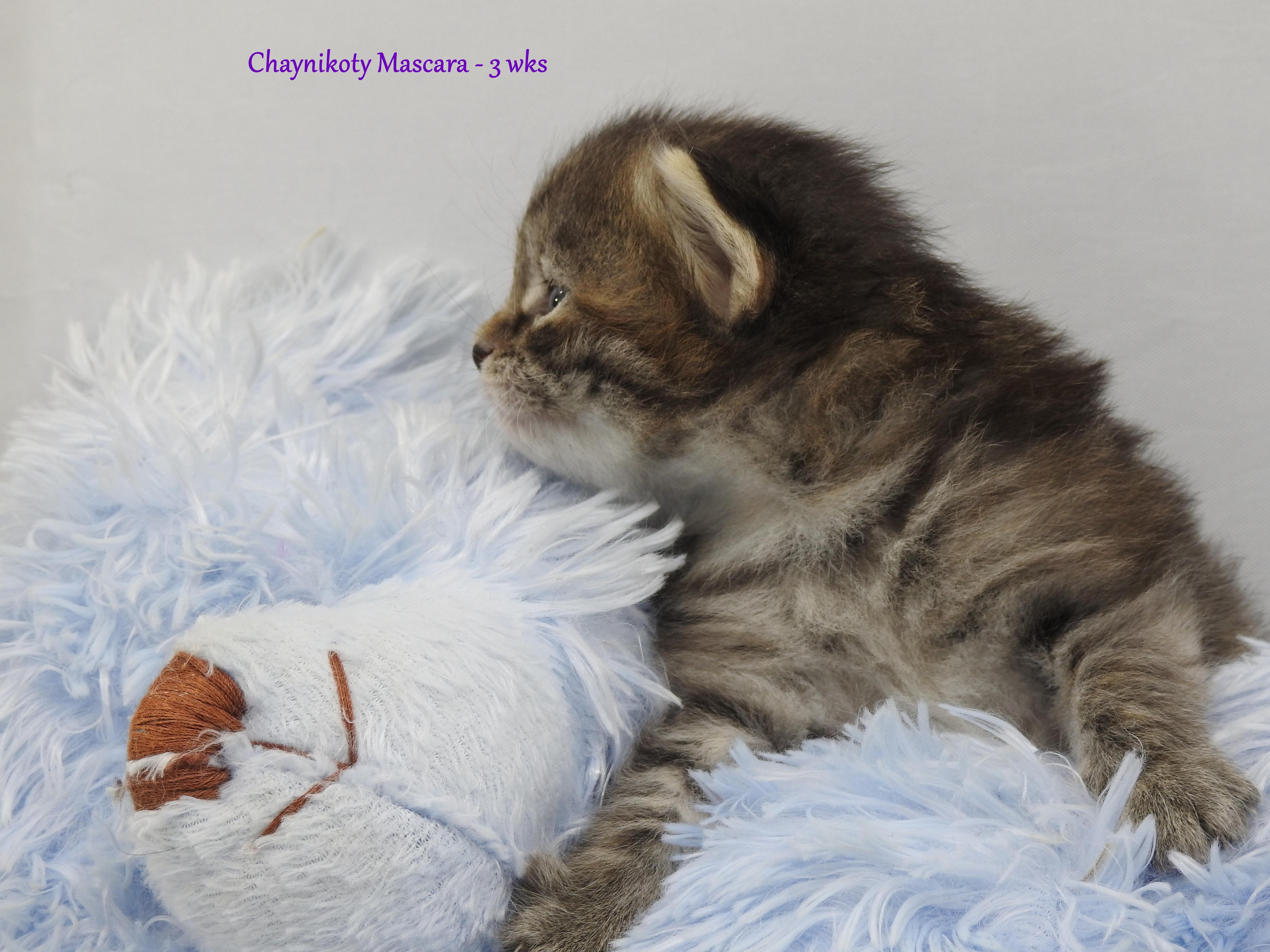 Chaynikoty Mascara - 3 wks