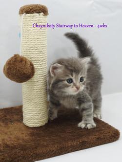 Chaynikoty Stairway to Heaven