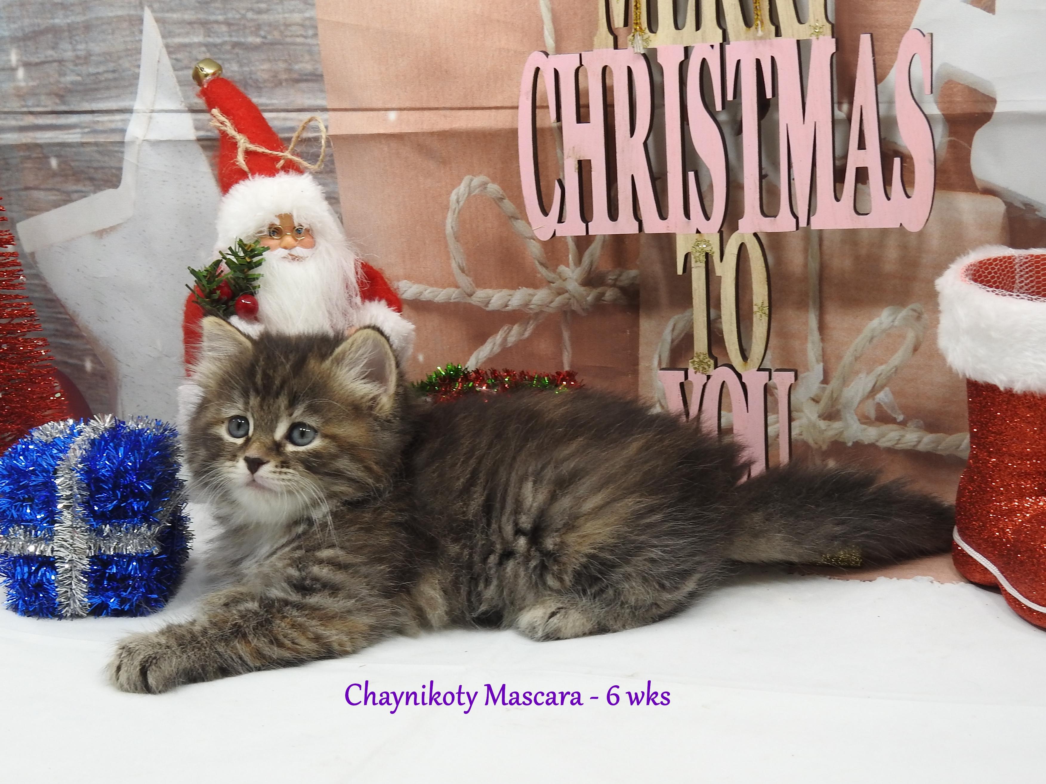 Chaynikoty Mascara - 6 wks13