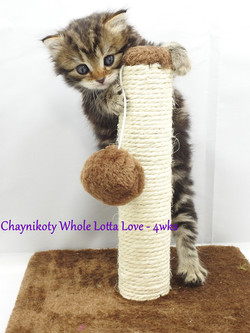 Chaynikoty Whole Lotta Love