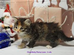 Chaynikoty Penny Lane