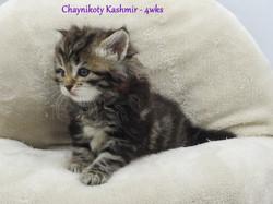 Chaynikoty Kashmir