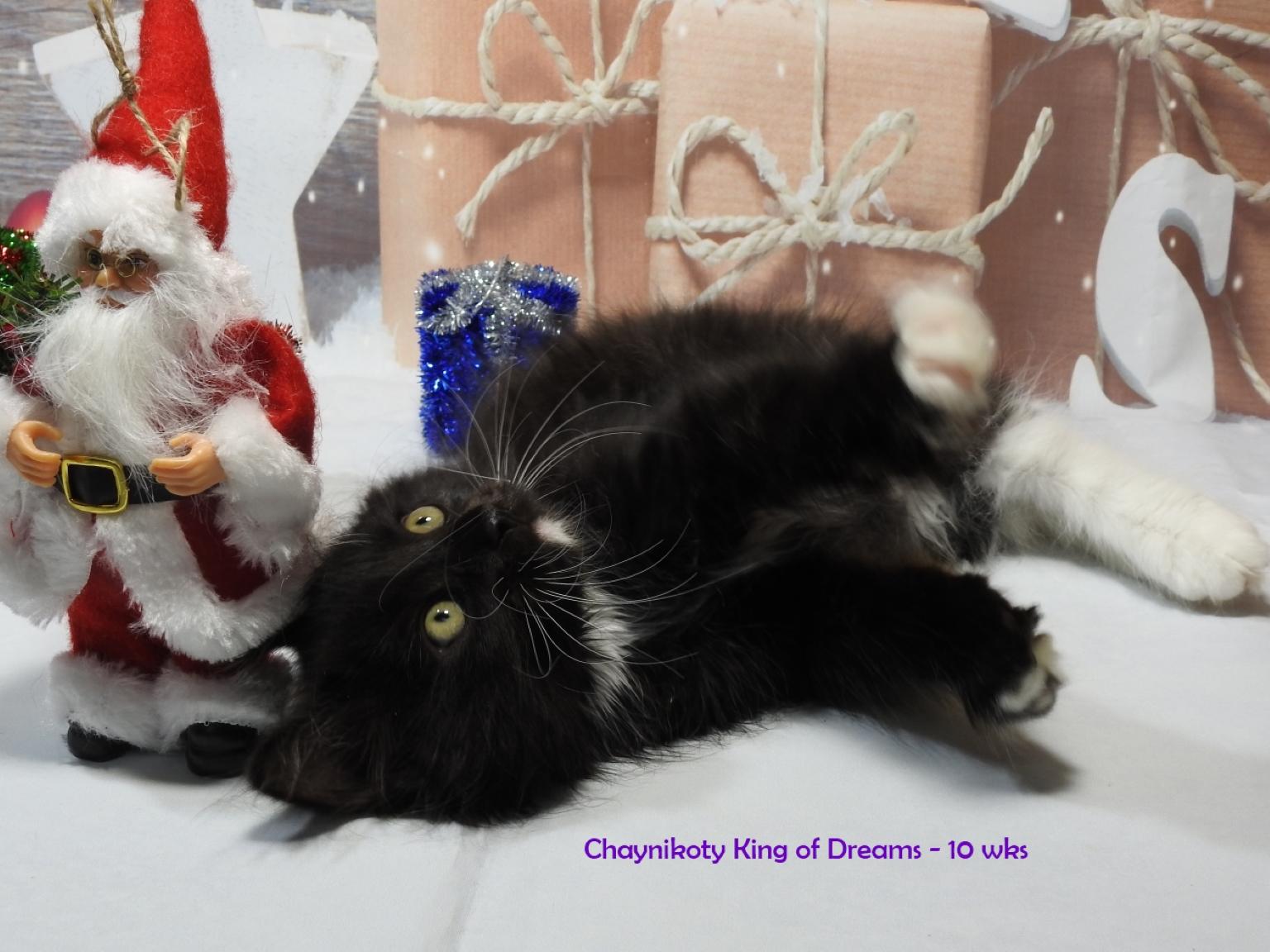 Chaynikoty King of Dreams