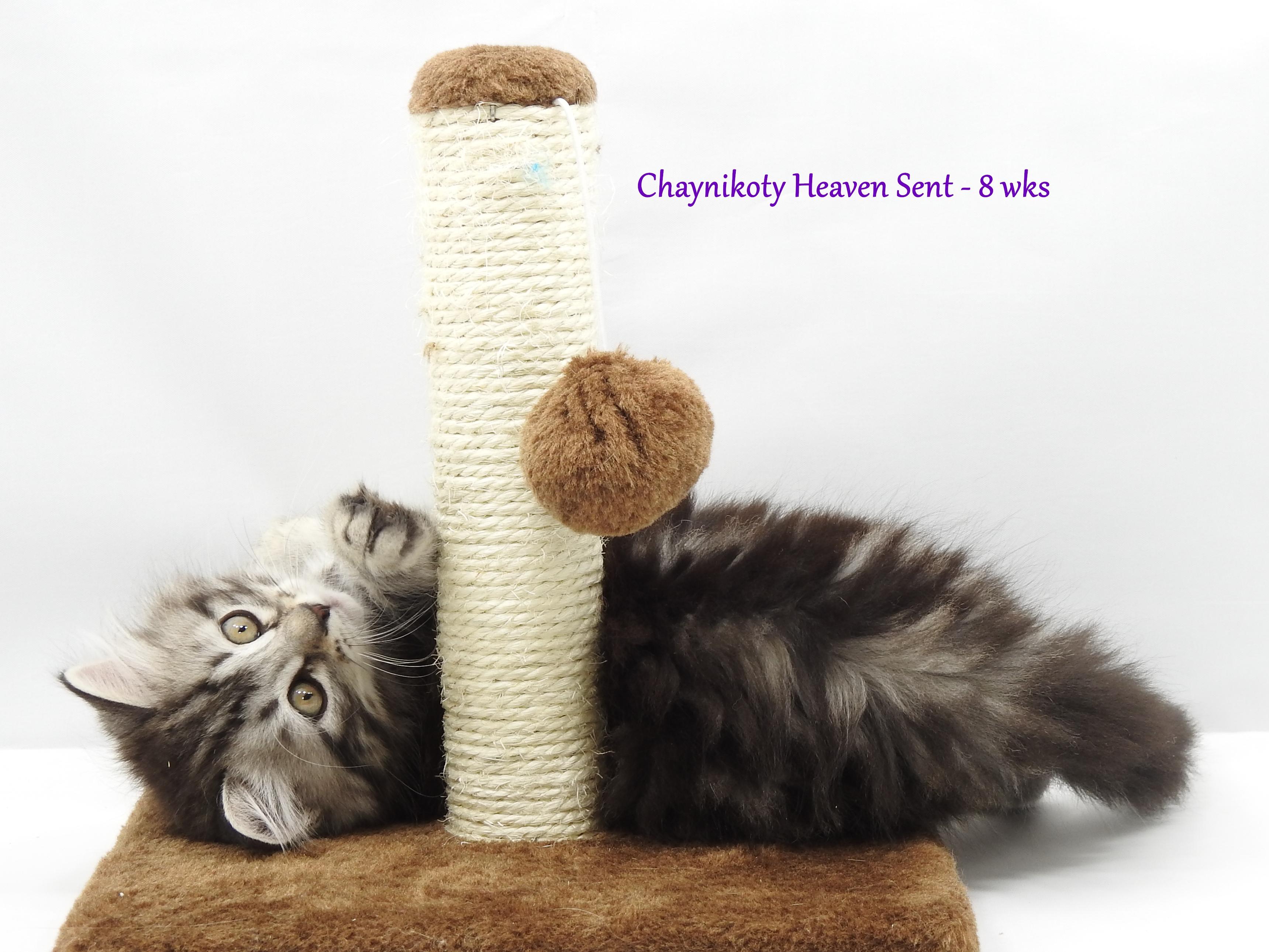 Chaynikoty Heaven Sent