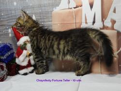 Chaynikoty Fortune Teller