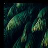 Foglie di palma verdi dietro a una roccia grigia rotante