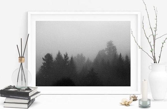 Fog Eaters
