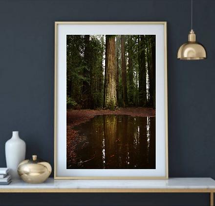 Woods Reflect