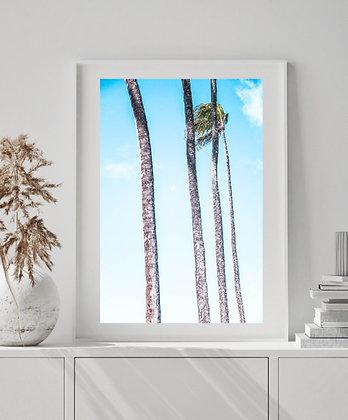 Moon Palm III