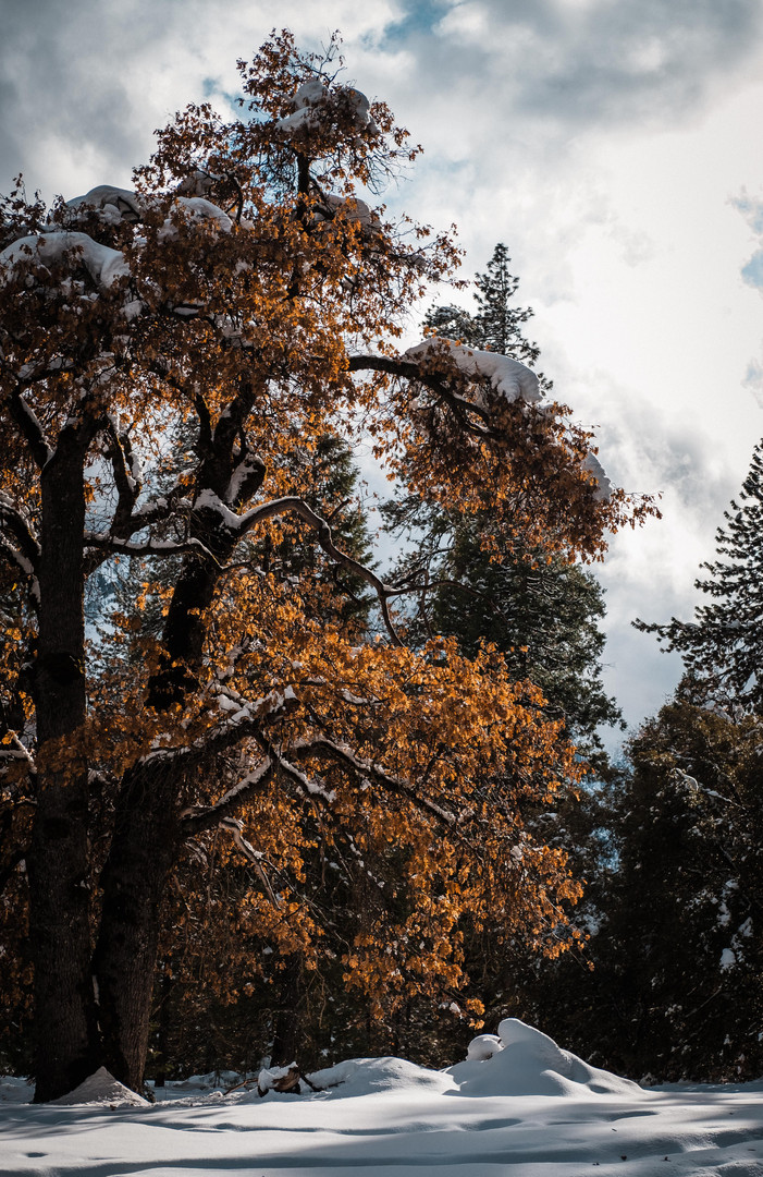 20191128_Yosemite_Thanksgiving__DSCF2476