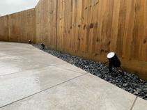 Porcelain slabs with a gravel border and Phillips Hue spot lights