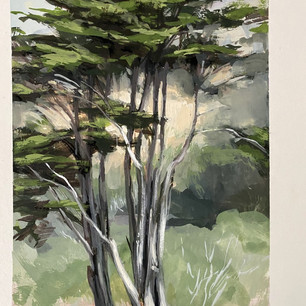 Stinson Beach Cypress (SOLD)
