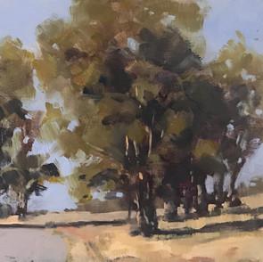 Point Pinole Eucalyptus