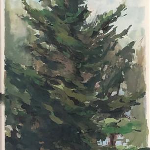 Homestead Redwood
