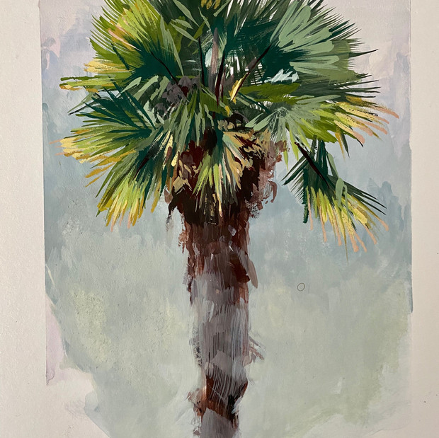 Mill Valley Palm
