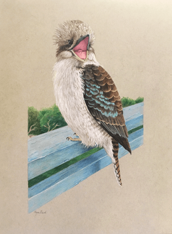 Laughing kookaburra.png