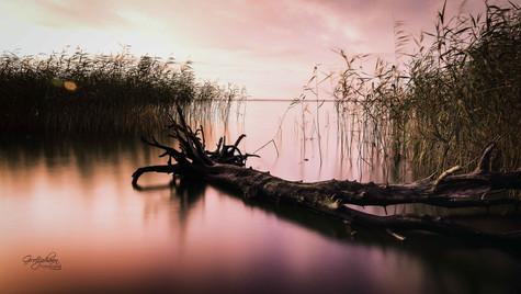 Baumstamm auf dem Achterwasser