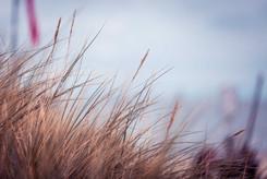 Ahlbeck @ Insel Usedom | Fotografieworkshop