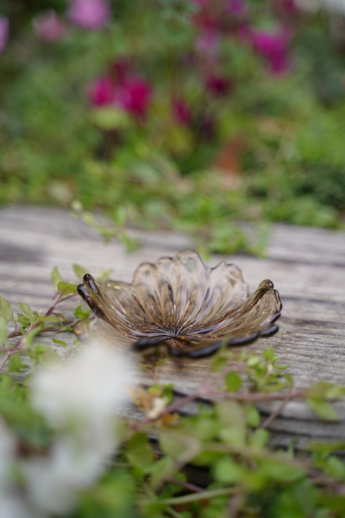 frill flower