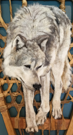 Snowshoe wolf 2.