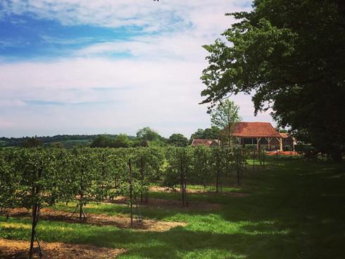 Cherry Barn, Rye
