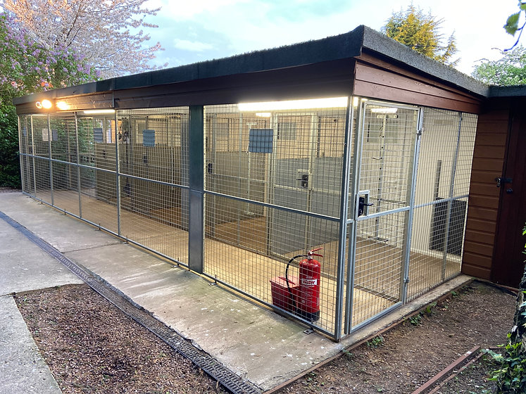 Night Time Dog Kennels Hillview Canine C