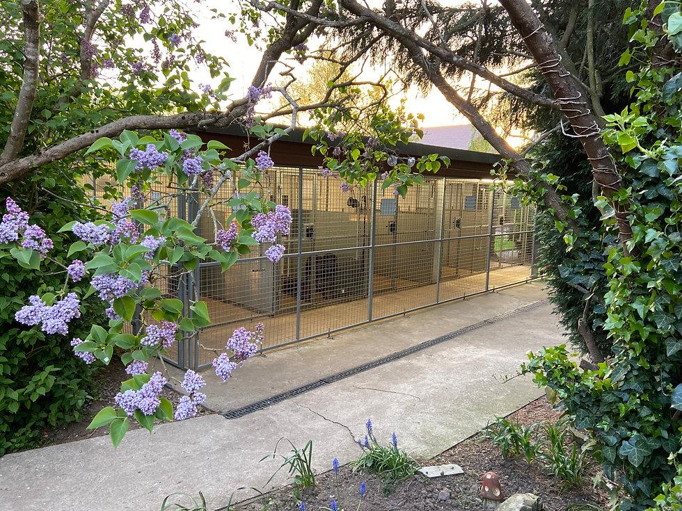 Dog Kennels Hillview Canine Centre.jpg