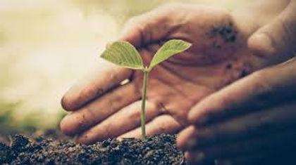 pousse plante.jpg