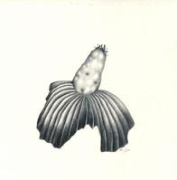 Zeichnung_030.jpg