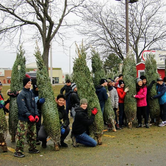 tree unload 3.jpg